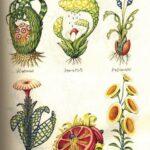 Codex Seraphinianus. Флора 1