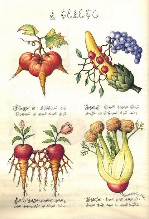 Codex Seraphinianus. Флора 3