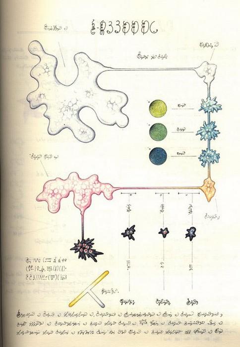 Codex Seraphinianus. Наука 2