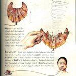 Codex Seraphinianus. Быт 2