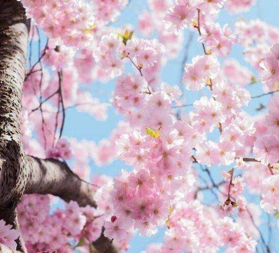 онлайн-конференции по переводу: весна 2020